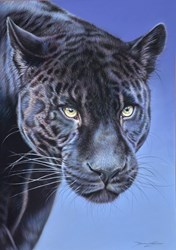 Black Jaguar by Darryn Eggleton - Original Drawing on Mounted Paper sized 19x27 inches. Available from Whitewall Galleries